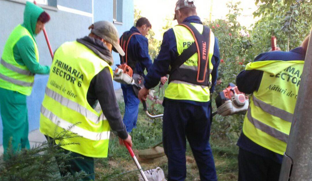 Grădinile de bloc din Sectorul 6 vor fi înfrumusețate de specialiștii din cadrul Administrației Domeniului Public și Dezvoltare Urbană