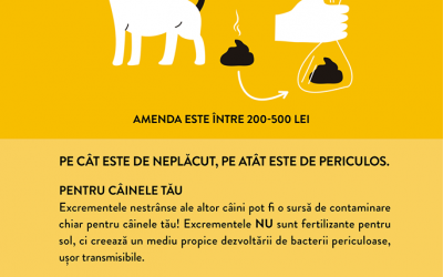 Peste 110.000 lei, amenzi aplicate în septembrie în Sectorul 6 pentru nerespectarea curățeniei pe domeniul public
