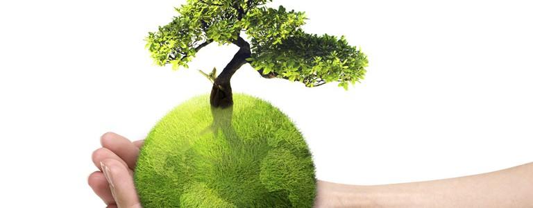 Aproape 800 de petiţii privind protecţia mediului au fost soluţionate în primele patru luni ale anului
