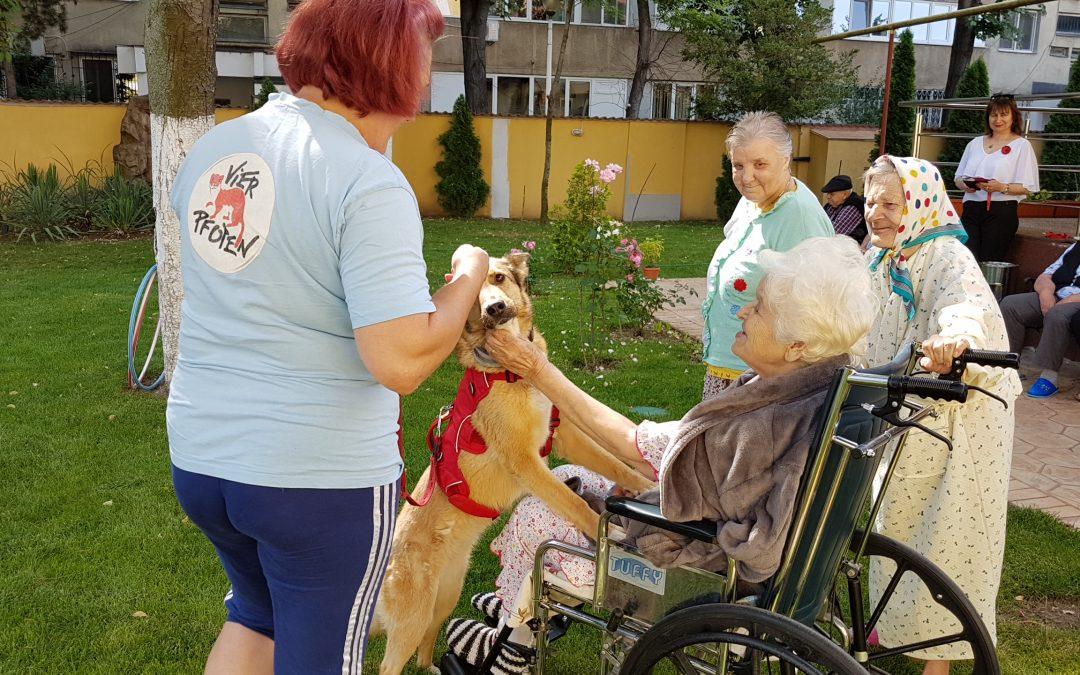100 de bătrâni din centrul Floare Roşie fac terapie cu animale