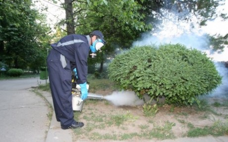 În Sectorul 6 sunt aplicate tratamente pentru combaterea dăunătorilor vegetali
