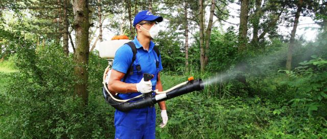 În Sectorul 6 continuă stropirile împotriva dăunătorilor vegetali