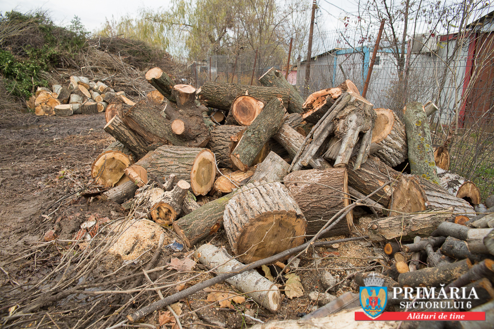 Primăria Sectorului 6 a oferit gratuit lemne pentru încălzirea locuințelor