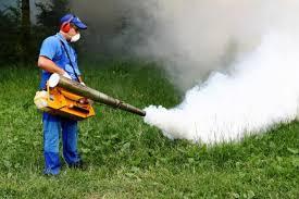 Tratamente de combatere a țânțarilor, aplicate pe spațiile verzi ale Sectorului 6
