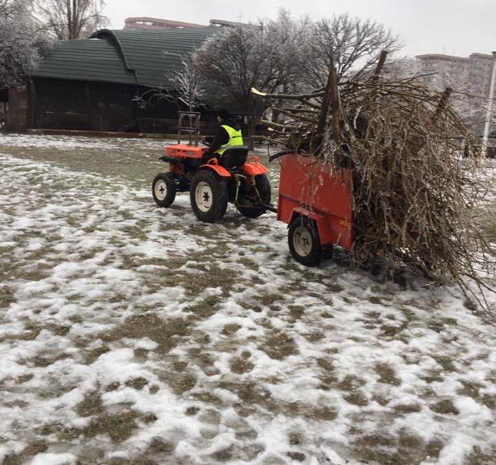 Arborii prăbușiți sau rupți în urma ploii îngheţate vor fi folosiţi ca lemn de foc de locuitorii Sectorul 6