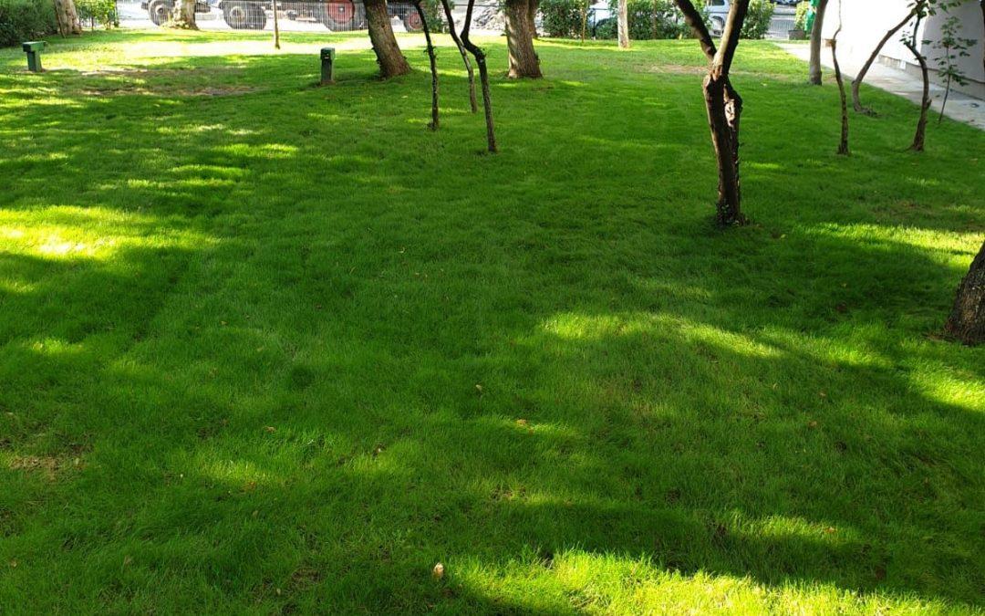Primăria Sector 6 distribuie GRATUIT seminţe de gazon pentru asociaţiile de proprietari