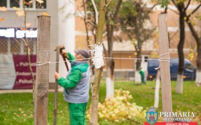 Arborii crescuţi în serele proprii ale Sectorului 6 înfrumuseţează grădinile blocurilor de locuinţe