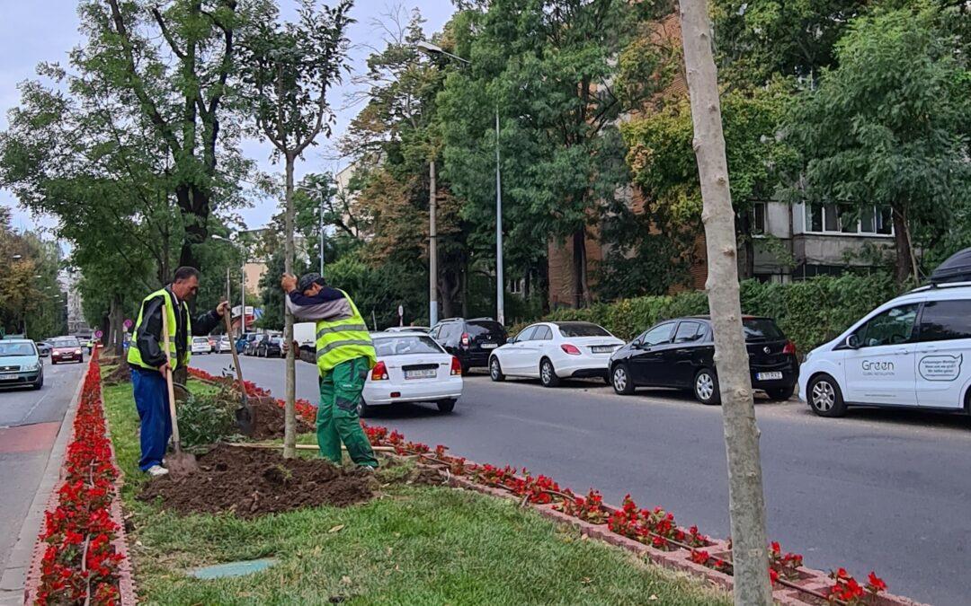 Din toamna aceasta și până în primăvara anului 2022, în Sectorul 6 vor fi plantați 2000 de arbori